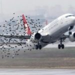Международный аэропорт Стригино закупил биоакустическую установку для отпугивания птиц